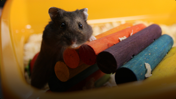 Do You Know?: Hamster Wheel and Insect Hotel