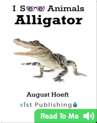I See Animals: Alligator