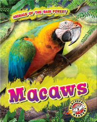 Animals of the Rain Forest: Macaws