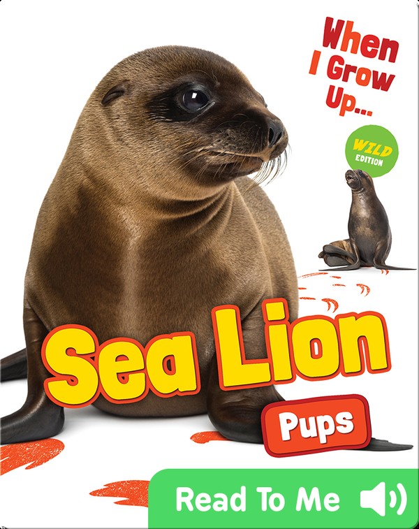 When I Grow Up: Sea Lion Pups