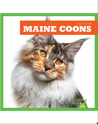 Cat Club: Maine Coon
