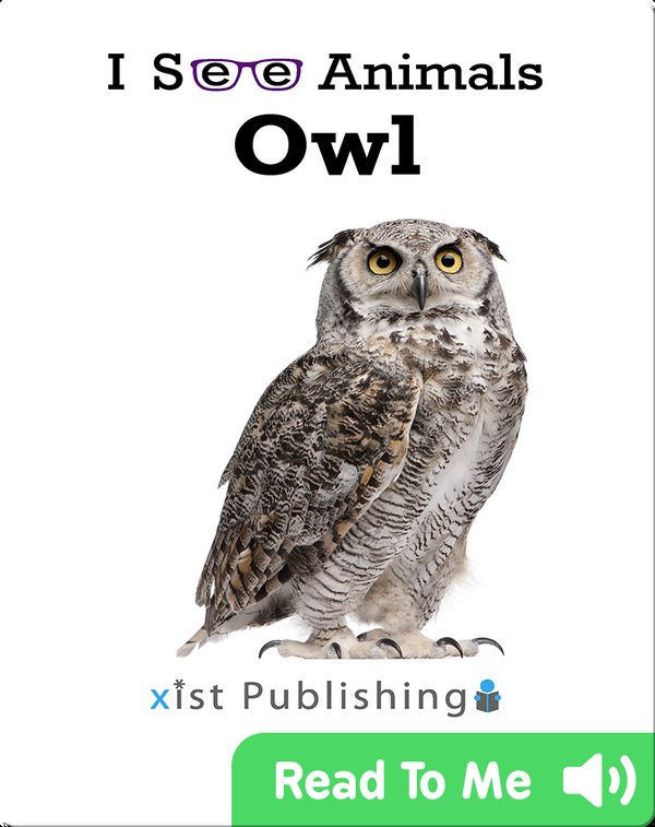 I See Animals: Owl