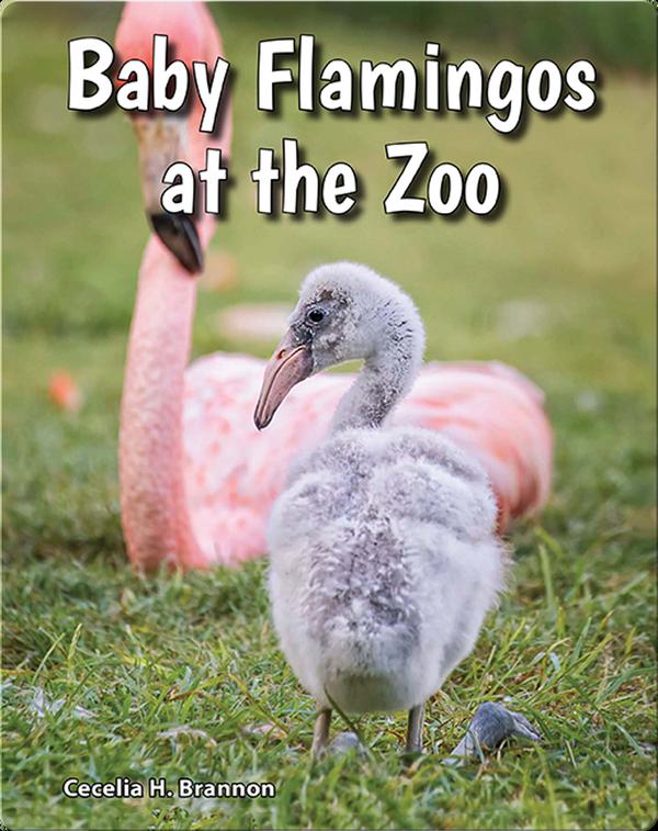 Baby Flamingos at the Zoo