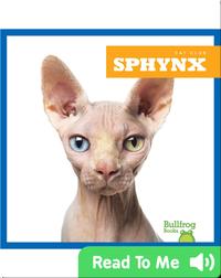 Cat Club: Sphynx