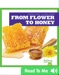 Where Does It Come From?: From Flower to Honey