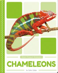 Rain Forest Animals: Chameleons
