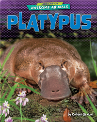 Awesome Animals: Platypus