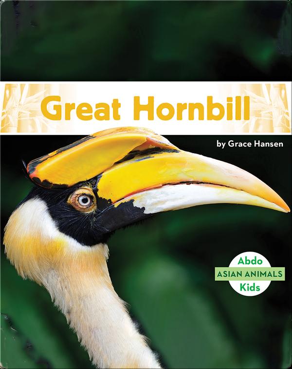 Asian Animals: Great Hornbill