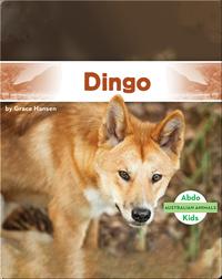 Australian Animals: Dingo