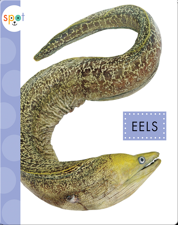 Ocean Animals: Eels