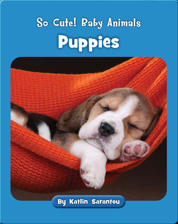 So Cute! Baby Animals Puppies