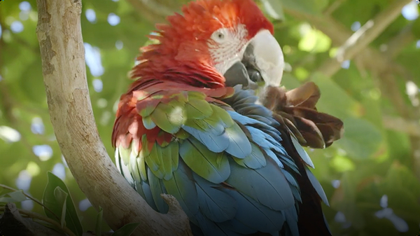 The Most Colorful Bird in the World