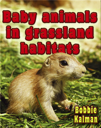 Baby Animals in Grassland Habitats