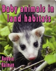 Baby Animals in Land Habitats