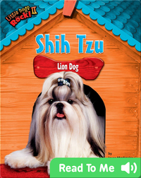 Shih Tzu: Lion Dog