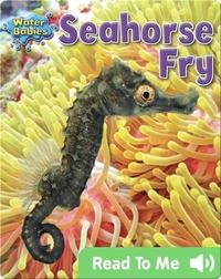 Seahorse Fry