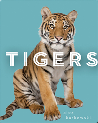 Zoo Animals: Tigers