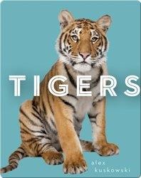 Zoo Animals: Tigers