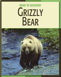 Road To Recovery: Grizzly Bear