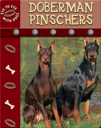 Eye To Eye With Dogs: Doberman Pinschers