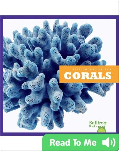Life Under The Sea: Corals