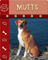 Eye To Eye With Dogs: Mutts