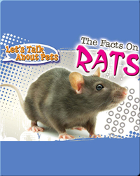 Let's Talk About Pets: The Facts On Rats