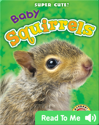 Super Cute! Baby Squirrels