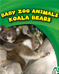 Baby Zoo Animals: Koala Bears