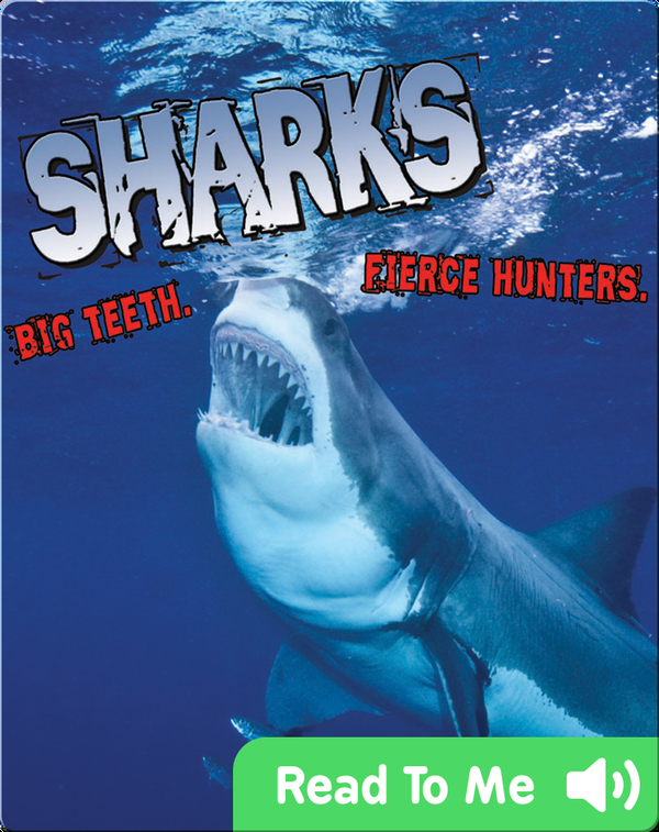 Sharks! Big Teeth. Fierce Hunters