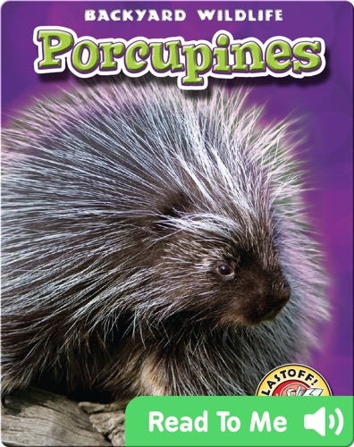 Porcupines: Backyard Wildlife