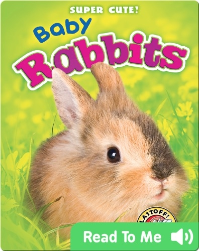 Super Cute! Baby Rabbits