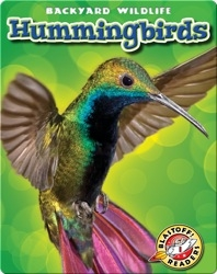 Backyard Wildlife: Hummingbirds