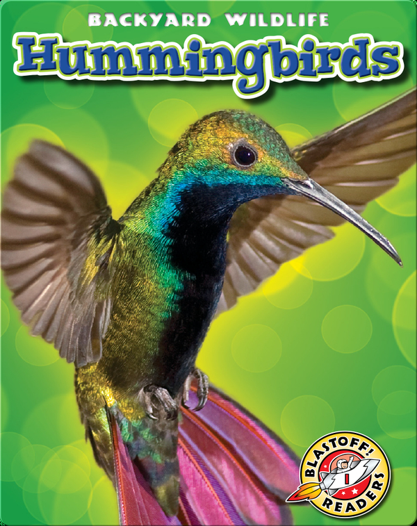 Backyard Wildlife: Hummingbirds