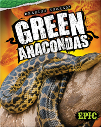Amazing Snakes! Green Anacondas