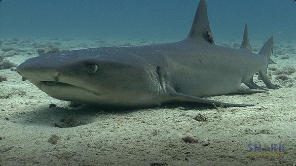 Shark Breathing
