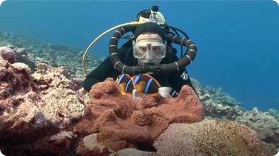 Jonathan Bird's Blue World: Anemonefish