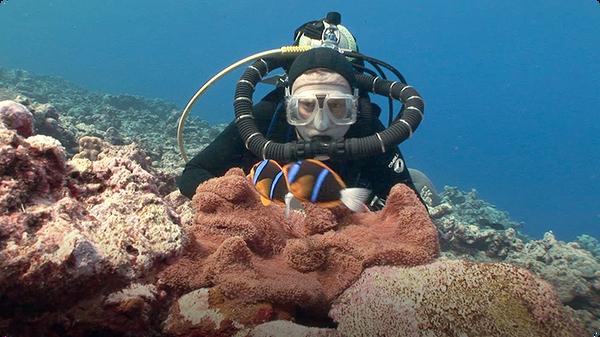 Jonathan Bird's Blue World: Anemonefish