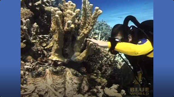 Giant clam grabs a divers hand?