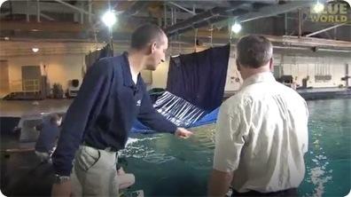 How to Hand feed a Manta Ray!