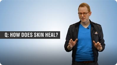 How Does Skin Heal?