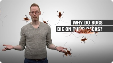 Why Do Bugs Die on Their Backs?