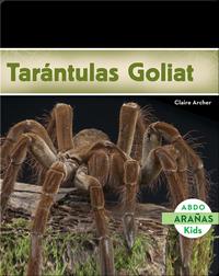 Tarántulas Goliat