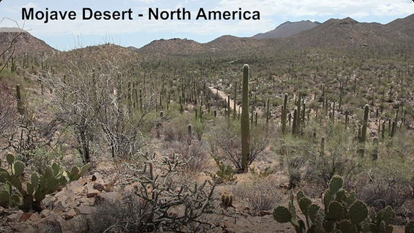 Did You Know: Deserts