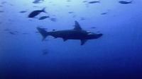 Spectacular Sharks