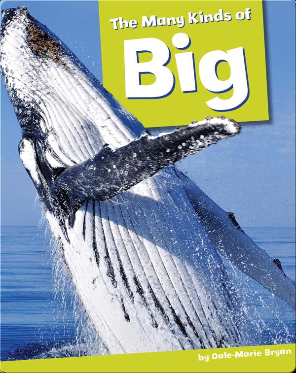 The Many Kinds Of Big