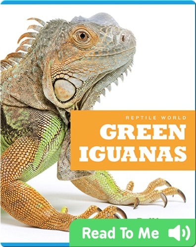 Reptile World: Green Iguanas