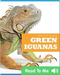 Reptile World: Green Iguanas
