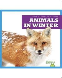 What Happens In Winter? Animals In Winter