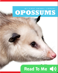 My First Animal Library: Opossums